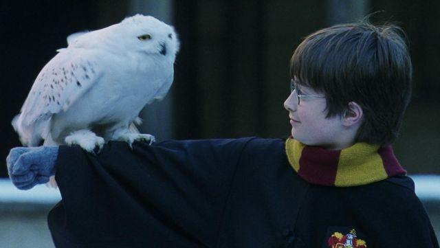 énorme réduction comment avoir meilleur grossiste L'écharpe Gryffondor porté par Harry Potter (Daniel ...
